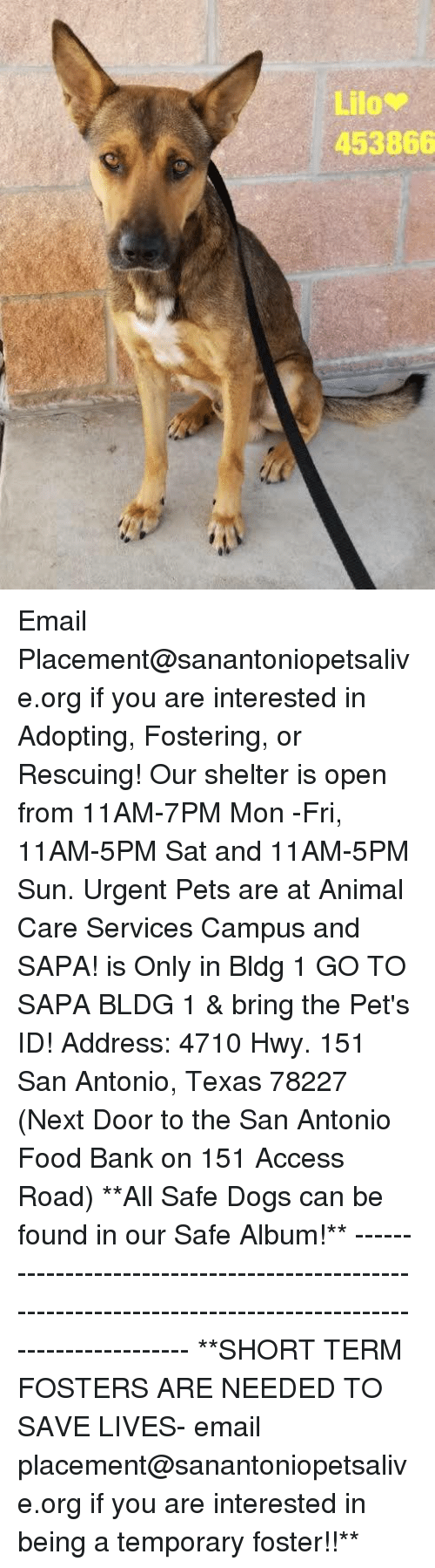 Dogs, Food, and Memes: 453866 Email Placement@sanantoniopetsalive.org if you are interested in Adopting, Fostering, or Rescuing!  Our shelter is open from 11AM-7PM Mon -Fri, 11AM-5PM Sat and 11AM-5PM Sun.  Urgent Pets are at Animal Care Services Campus and SAPA! is Only in Bldg 1 GO TO SAPA BLDG 1 & bring the Pet's ID! Address: 4710 Hwy. 151 San Antonio, Texas 78227 (Next Door to the San Antonio Food Bank on 151 Access Road)  **All Safe Dogs can be found in our Safe Album!** ---------------------------------------------------------------------------------------------------------- **SHORT TERM FOSTERS ARE NEEDED TO SAVE LIVES- email placement@sanantoniopetsalive.org if you are interested in being a temporary foster!!**