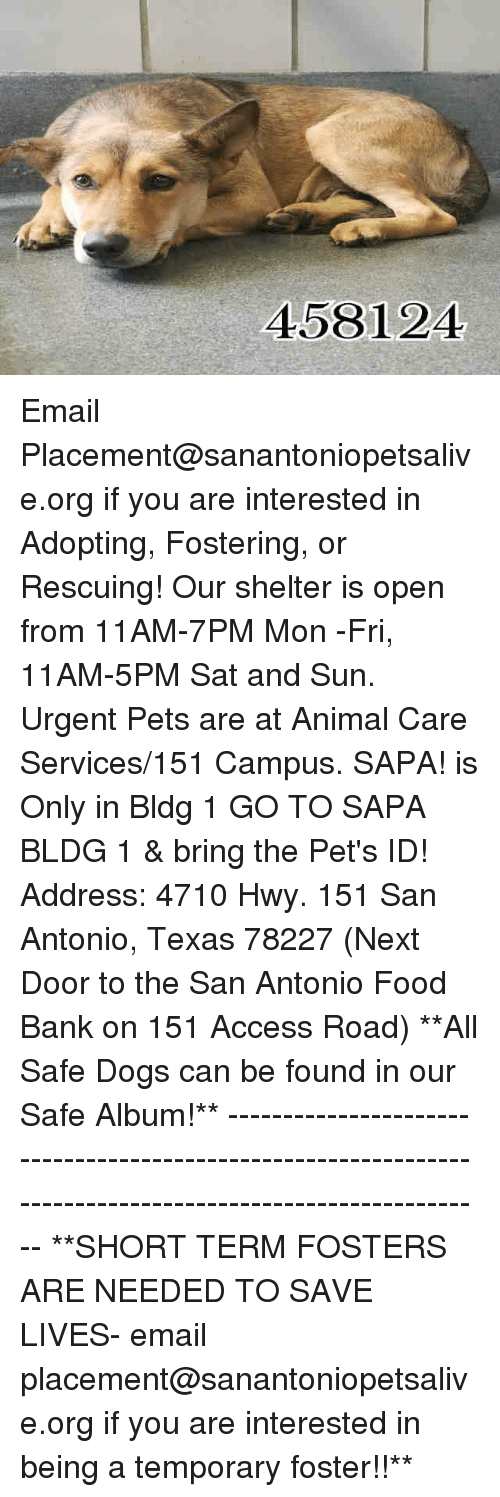 Dogs, Food, and Memes: 458124 Email Placement@sanantoniopetsalive.org if you are interested in Adopting, Fostering, or Rescuing!  Our shelter is open from 11AM-7PM Mon -Fri, 11AM-5PM Sat and Sun.  Urgent Pets are at Animal Care Services/151 Campus. SAPA! is Only in Bldg 1 GO TO SAPA BLDG 1 & bring the Pet's ID! Address: 4710 Hwy. 151 San Antonio, Texas 78227 (Next Door to the San Antonio Food Bank on 151 Access Road)  **All Safe Dogs can be found in our Safe Album!** ---------------------------------------------------------------------------------------------------------- **SHORT TERM FOSTERS ARE NEEDED TO SAVE LIVES- email placement@sanantoniopetsalive.org if you are interested in being a temporary foster!!**
