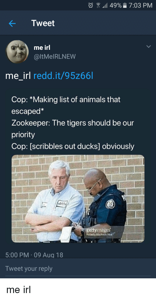 Animals, Ducks, and Tigers: 49%  7:03 PM  Tweet  me irl  @ltMeIRLNEW  me_irl redd.it/95z66l  Cop: *Making list of animals that  escaped  Zookeeper: The tigers should be our  priority  Cop: [scribbles out ducks] obviously  gettyimages  Roberto Mochado Noa  5:00 PM-09 Aug 18  Tweet your reply