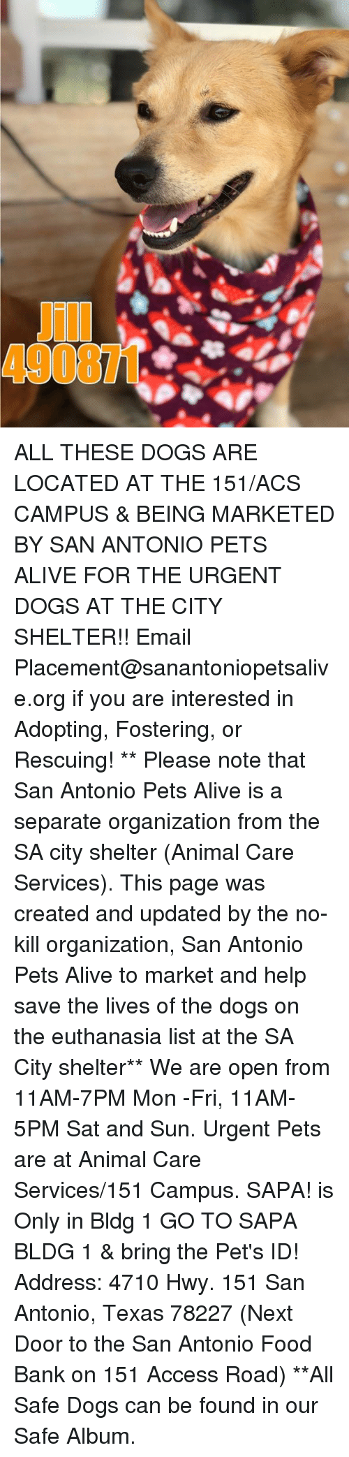 Alive, Dogs, and Food: 490871 ALL THESE DOGS ARE LOCATED AT THE 151/ACS CAMPUS & BEING MARKETED BY SAN ANTONIO PETS ALIVE FOR THE URGENT DOGS AT THE CITY SHELTER!!  Email Placement@sanantoniopetsalive.org if you are interested in Adopting, Fostering, or Rescuing!                                                                                                                                                                                                                                                                                                                                                             ** Please note that San Antonio Pets Alive is a separate organization from the SA city shelter (Animal Care Services). This page was created and updated by the no-kill organization, San Antonio Pets Alive to market and help save the lives of the dogs on the euthanasia list at the SA City shelter**  We are open from 11AM-7PM Mon -Fri, 11AM-5PM Sat and Sun. Urgent Pets are at Animal Care Services/151 Campus. SAPA! is Only in Bldg 1 GO TO SAPA BLDG 1 & bring the Pet's ID! Address: 4710 Hwy. 151 San Antonio, Texas 78227 (Next Door to the San Antonio Food Bank on 151 Access Road) **All Safe Dogs can be found in our Safe Album.