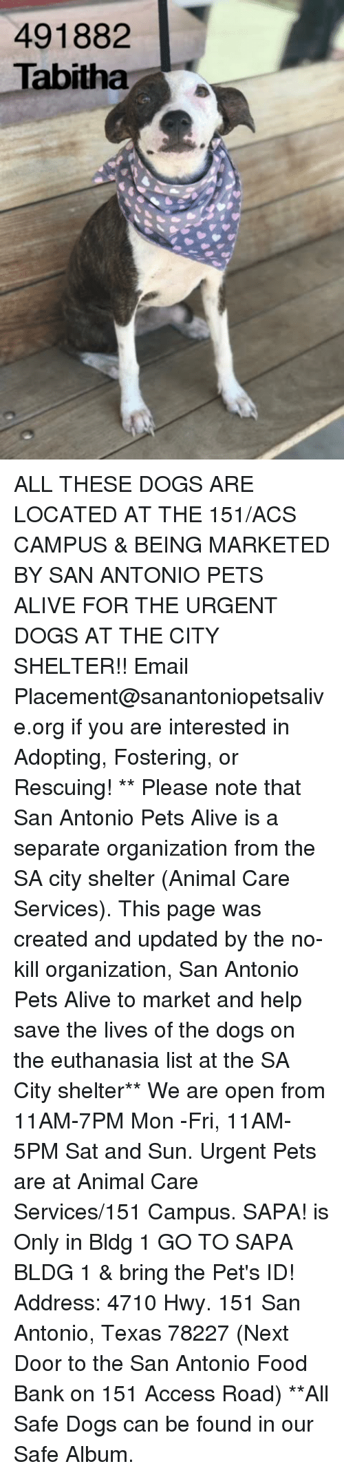 Alive, Dogs, and Food: 491882  Tabitha ALL THESE DOGS ARE LOCATED AT THE 151/ACS CAMPUS & BEING MARKETED BY SAN ANTONIO PETS ALIVE FOR THE URGENT DOGS AT THE CITY SHELTER!!  Email Placement@sanantoniopetsalive.org if you are interested in Adopting, Fostering, or Rescuing!                                                                                                                                                                                                                                                                                                                                                             ** Please note that San Antonio Pets Alive is a separate organization from the SA city shelter (Animal Care Services). This page was created and updated by the no-kill organization, San Antonio Pets Alive to market and help save the lives of the dogs on the euthanasia list at the SA City shelter**  We are open from 11AM-7PM Mon -Fri, 11AM-5PM Sat and Sun. Urgent Pets are at Animal Care Services/151 Campus. SAPA! is Only in Bldg 1 GO TO SAPA BLDG 1 & bring the Pet's ID! Address: 4710 Hwy. 151 San Antonio, Texas 78227 (Next Door to the San Antonio Food Bank on 151 Access Road) **All Safe Dogs can be found in our Safe Album.