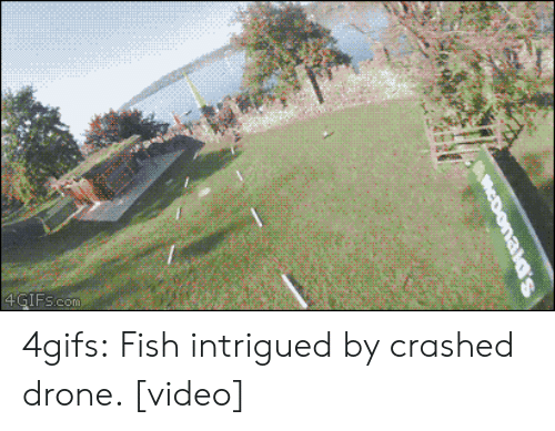 Drone, Target, and Tumblr: 4GIFs.com 4gifs:  Fish intrigued by crashed drone. [video]