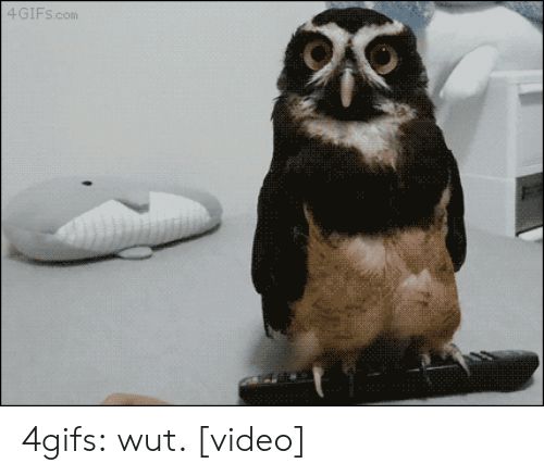 Confused, Target, and Tumblr: 4GIFS.com 4gifs:  wut. [video]