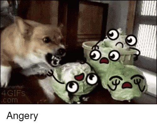 Com, 4gifs, and Angery: 4GIFs  com Angery