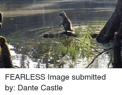 Image, Castle, and Dante: 5 FEARLESS  Image submitted by: Dante Castle