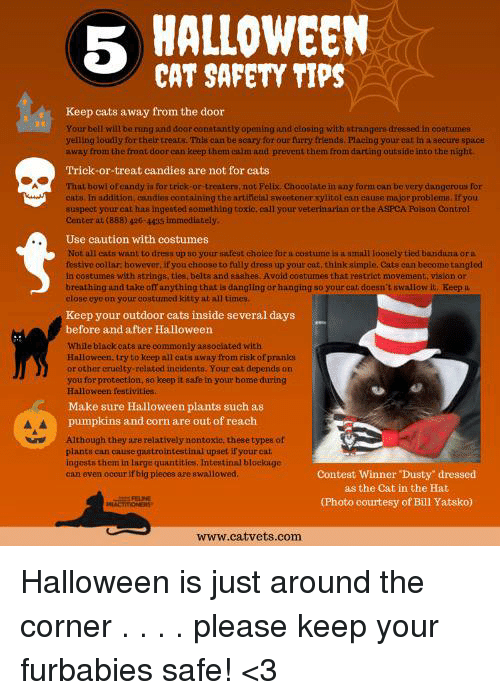 Halloween Cat Safety Guide