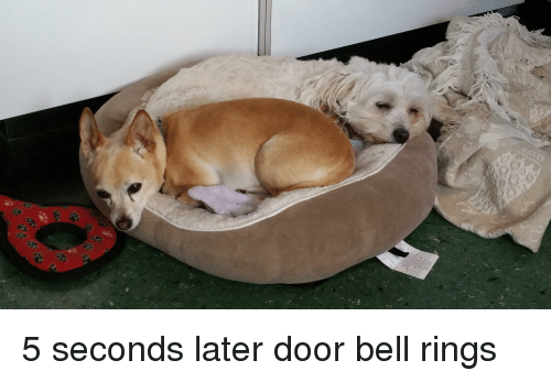 Bell, Rings, and Door
