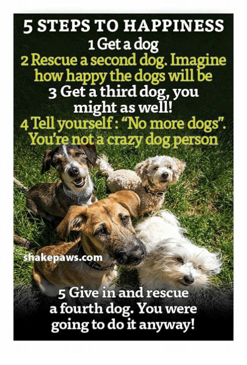 5 steps to happiness 1get a dog 2 rescue a second dog imagine how crazy dogs and memes 5 steps to happiness 1get a dog 2 rescue solutioingenieria Choice Image