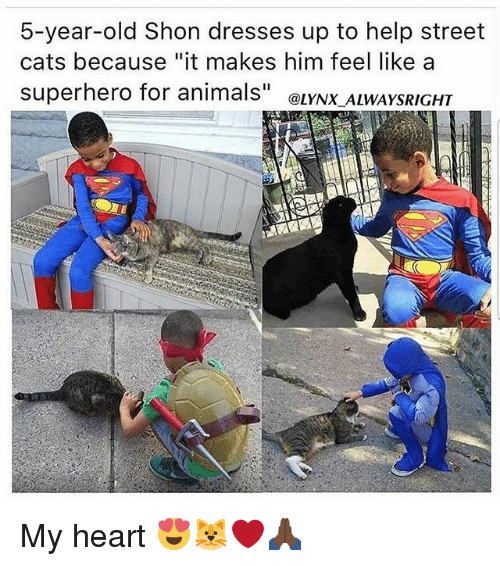 "Animals, Cats, and Memes: 5-year-old Shon dresses up to help street  cats because ""it makes him feel like a  superhero for animals"" eLYNX ALWAYSRIGHT My heart 😍🐱❤🙏🏿"