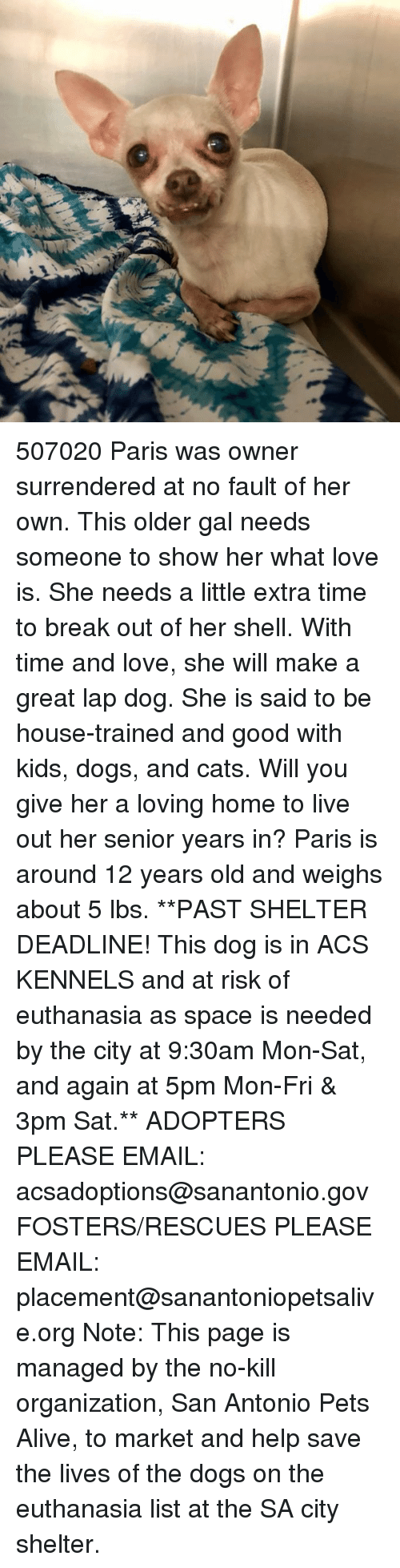 Alive, Cats, and Dogs: 507020 Paris was owner surrendered at no fault of her own. This older gal needs someone to show her what love is. She needs a little extra time to break out of her shell. With time and love, she will make a great lap dog. She is said to be house-trained and good with kids, dogs, and cats. Will you give her a loving home to live out her senior years in? Paris is around 12 years old and weighs about 5 lbs.  **PAST SHELTER DEADLINE! This dog is in ACS KENNELS and at risk of euthanasia as space is needed by the city at 9:30am Mon-Sat, and again at 5pm Mon-Fri & 3pm Sat.**  ADOPTERS PLEASE EMAIL: acsadoptions@sanantonio.gov  FOSTERS/RESCUES PLEASE EMAIL: placement@sanantoniopetsalive.org  Note: This page is managed by the no-kill organization, San Antonio Pets Alive, to market and help save the lives of the dogs on the euthanasia list at the SA city shelter.
