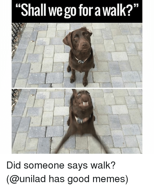 """Funny, Memes, and Good: 53  """"Shall we go for a walk?""""  0 Did someone says walk? (@unilad has good memes)"""