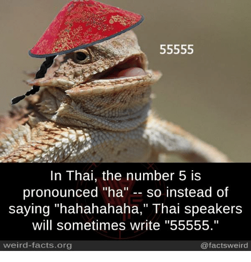 "Facts, Memes, and Weird: 55555  In Thai, the number 5 is  pronounced ""ha  so instead of  saying ""hahahahaha,"" Thai speakers  will sometimes write ""55555.""  weird-facts.org  @facts weird"