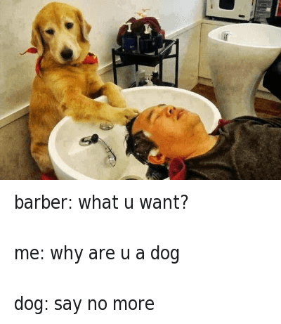 Barber, Dogs, and Funny Jokes: barber: what u want?  me: why are u a dog  dog: say no more barber: what u want?-me: why are u a dog-dog: say no more