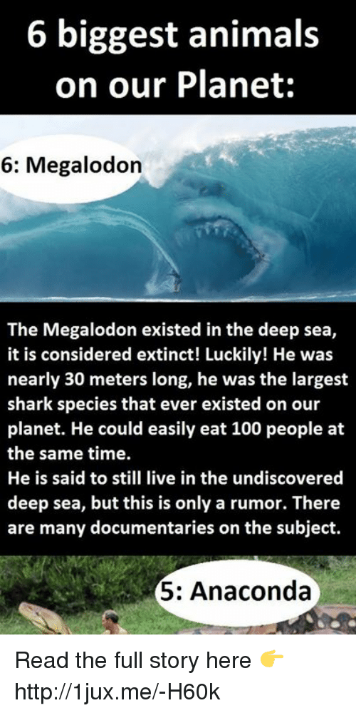 6 Biggest Animals on Our Planet 6 Megalodon the Megalodon