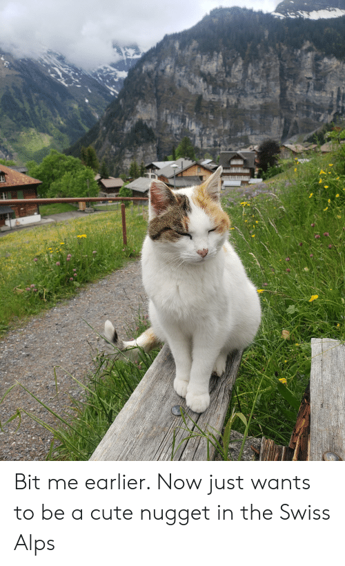 Cute, Swiss, and Alps: 6 Bit me earlier. Now just wants to be a cute nugget in the Swiss Alps