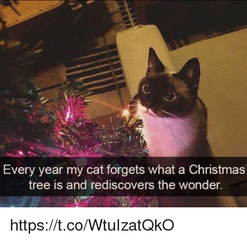 Christmas, Memes, and Christmas Tree: 6  Every year my cat forgets what a Christmas  tree is and rediscovers the wonden. https://t.co/WtuIzatQkO