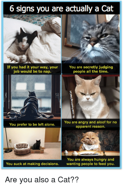6 signs you are actually a cat if you had 30650759 6 signs you are actually a cat if you had it your way youryou are