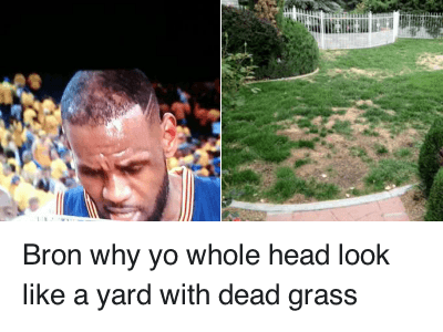 Haircut, Head, and LeBron's Hairline: Bron why yo whole head look like a yard With dead grass Bron why yo whole head look like a yard with dead grass