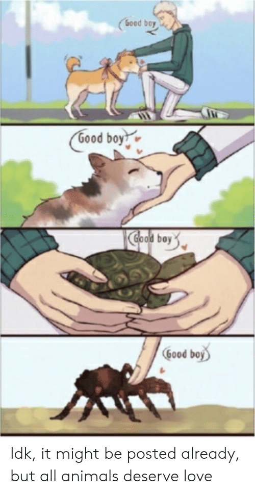Animals, Love, and Good: (6oed bay  6ood boy  Clood bay  Good boy Idk, it might be posted already, but all animals deserve love