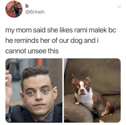 Mom, Her, and Dog: @6rineh  my mom said she likes rami malek bc  he reminds her of our dog andi  cannot unsee this