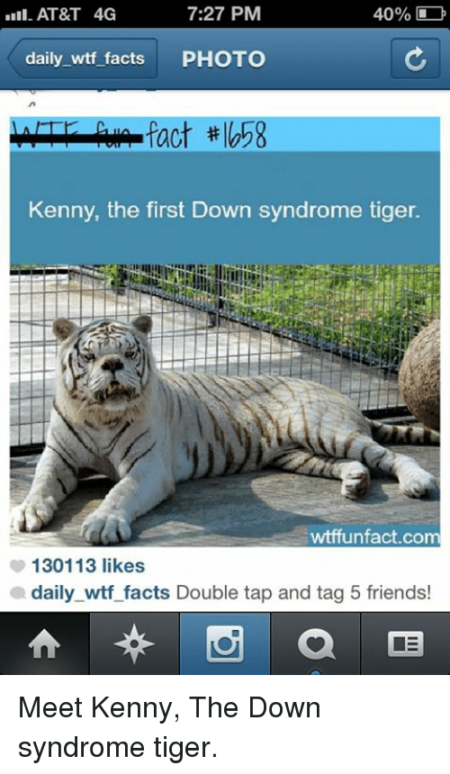 First Down Syndrome Tiger