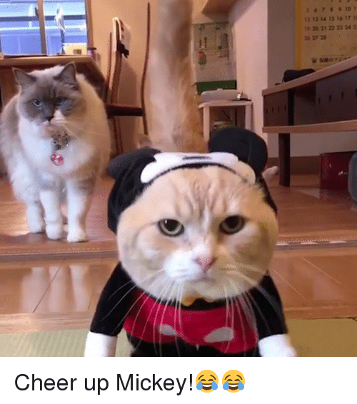 7 8 10 i 12 12 14 15 16 17 16207727 ✅ 25 best memes about cheer up cheer up memes,Cheer Up Meme