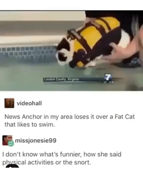 News, Girl Memes, and Fat: 7  videohall  News Anchor in my area loses it over a Fat Cat  that likes to swim.  missjonesie99  I don't know what's funnier, how she said  phvsical activities or the snort.