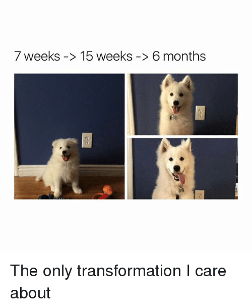Girl Memes, Caring, and  Care: 7 weeks 15 weeks 6 months The only transformation I care about