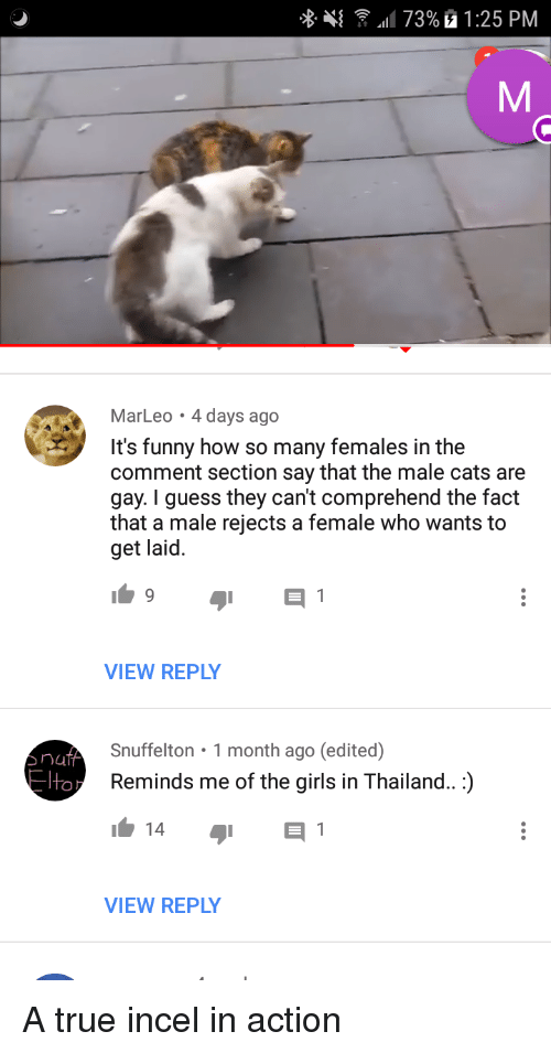 Can male cats be gay