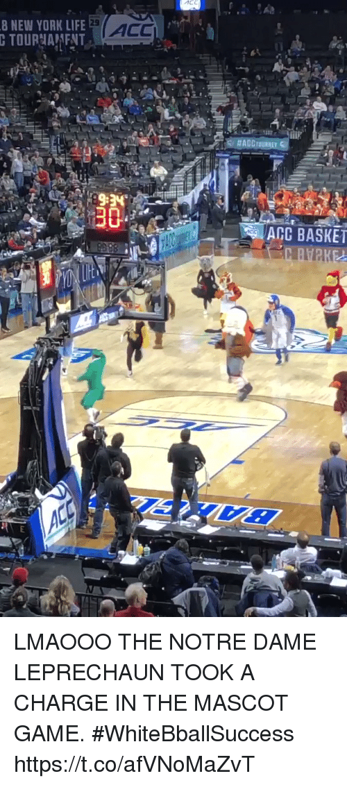 Basketball, Life, and New York: 8 NEW YORK LIFE  29  ACC  ACC BASKET LMAOOO THE NOTRE DAME LEPRECHAUN TOOK A CHARGE IN THE MASCOT GAME. #WhiteBballSuccess https://t.co/afVNoMaZvT