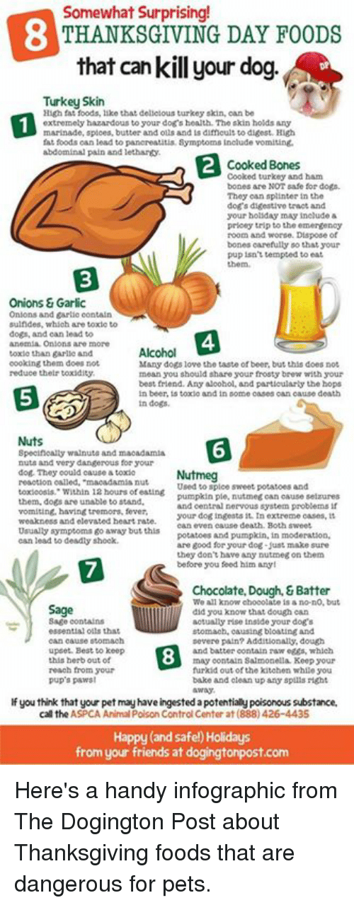 Is Pumpkin Good For Dogs With Pancreatitis