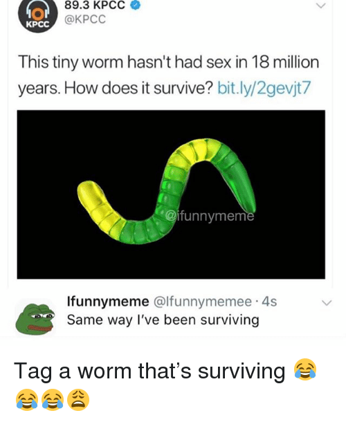 Funny, Sex, and Been: 89.3 KPCC  @KPCC  KPCC  This tiny worm hasn't had sex in 18 million  years. How does it survive? bit.ly/2gevjt/  @ifunnymem  lfunnymeme @lfunnymemee 4s  Same way I've been surviving Tag a worm that's surviving 😂😂😂😩