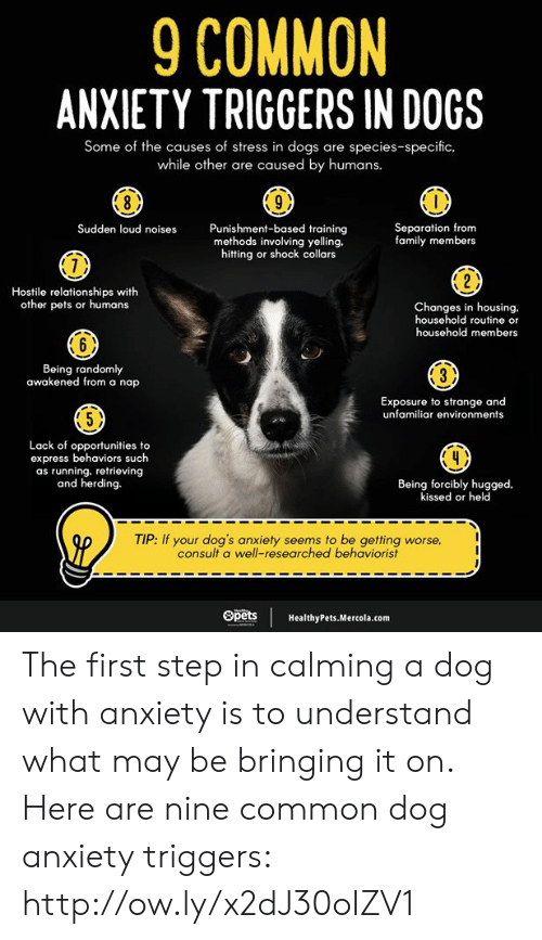 Dogs, Family, and Memes: 9 COMMON  ANXIETY TRIGGERS IN DOGS  Some of the causes of stress in dogs are species-specific.  while other are caused by humans.  Separation from  family members  Punishment-based training  methods involving yelling.  hitting or shock collars  Sudden loud noises  7)  Hostile relationships with  other pets or humans  Changes in housing.  household routine or  household members  6 )  Being randomly  awakened from a nap  Exposure to strange and  unfamiliar environments  5 X  Lack of opportunities to  express behaviors such  as running. retrieving  and herding.  Being forcibly hugged  kissed or held  TIP: If your dog's anxiety seems to be getting worse  consult a well-researched behaviorist  SpetsHealthyPets.Mercola.com The first step in calming a dog with anxiety is to understand what may be bringing it on. Here are nine common dog anxiety triggers:  http://ow.ly/x2dJ30oIZV1