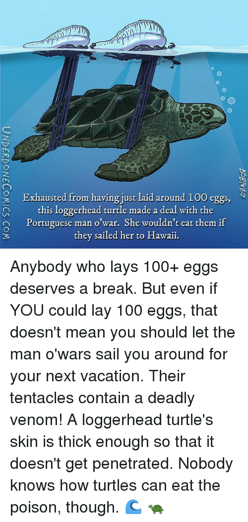Anaconda, Lay's, and Memes: 9 Exhausted from having just laid around 100 eggs  this loggerhead turtle made a deal with the  O Portuguese man o war. She wouldn't eat them if  they sailed her to Hawaii. Anybody who lays 100+ eggs deserves a break. But even if YOU could lay 100 eggs, that doesn't mean you should let the man o'wars sail you around for your next vacation. Their tentacles contain a deadly venom! A loggerhead turtle's skin is thick enough so that it doesn't get penetrated. Nobody knows how turtles can eat the poison, though. 🌊 🐢
