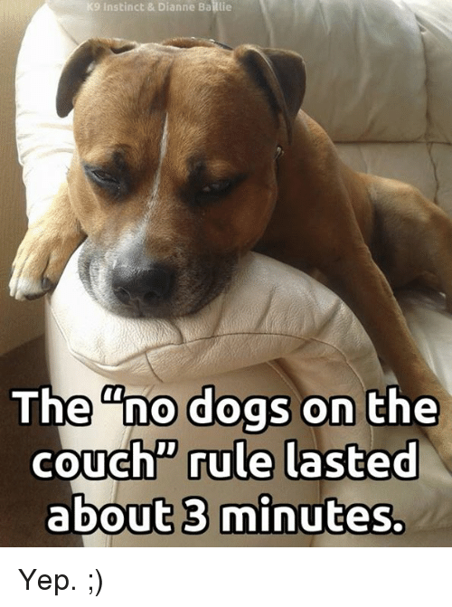 "Dogs, Memes, and Couch: 9 Instinct & Dianne Baillie  The ""no dogs on the  couch"" rule lasted  about 3 minutes. Yep. ;)"
