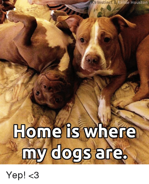 Dogs, Memes, and Home: 9 Instinct  ellie Houston  Home is where  my dogs are Yep! <3