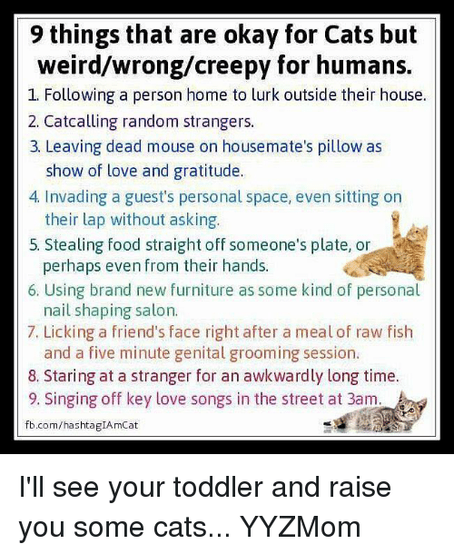 9 Things That Are Okay for Cats but Weirdwrongcreepy for Humans 1