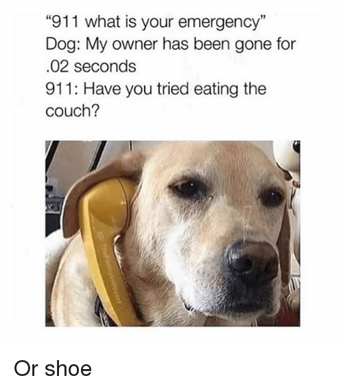 "Couch, What Is, and Girl Memes: 911 what is your emergency""  Dog: My owner has been gone for  .02 seconds  911: Have you tried eating the  couch? Or shoe"