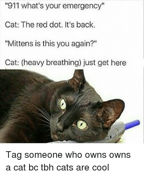 "Dank Memes, Cat, and Red: ""911 what's your emergency""  Cat: The red dot. It's back.  ""Mittens is this you again?""  Cat: (heavy breathing) just get here Tag someone who owns owns a cat bc tbh cats are cool"