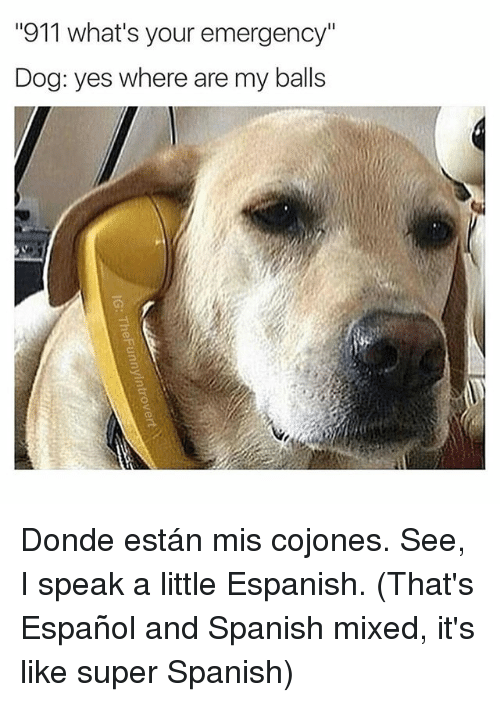 """Spanish, Espanol, and Dank Memes: """"911 what's your emergency""""  Dog: yes where are my balls Donde están mis cojones. See, I speak a little Espanish. (That's Español and Spanish mixed, it's like super Spanish)"""