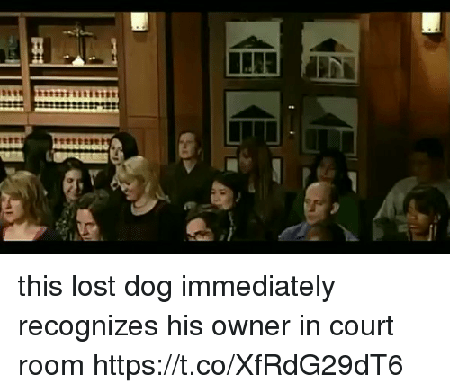 Funny, Lost, and Dog: 912 this lost dog immediately recognizes his owner in court room https://t.co/XfRdG29dT6