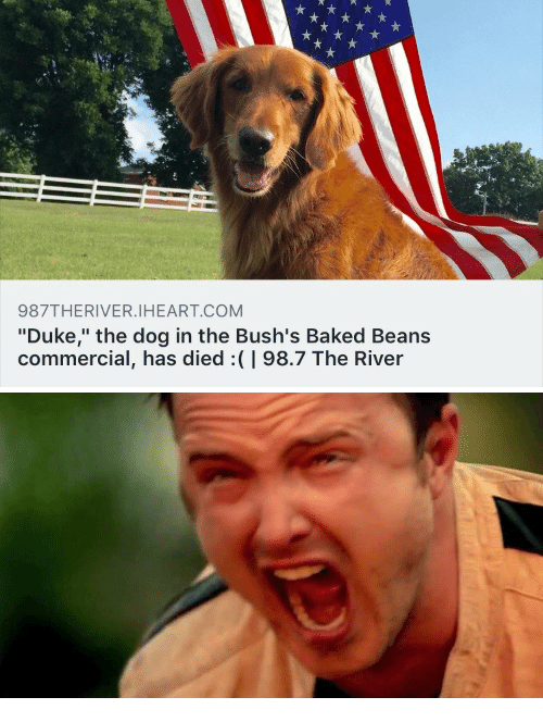 987theriveriheartcom Duke The Dog In The Bush S Baked Beans