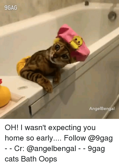 9gag, Cats, and Memes: 9GAG  AngelBengal OH! I wasn't expecting you home so early.... Follow @9gag - - Cr: @angelbengal - - 9gag cats Bath Oops