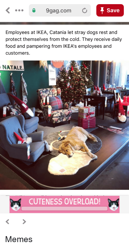 9gag, Dogs, and Food: 9gag.com O  Save  Employees at IKEA, Catania let stray dogs rest and  protect themselves from the cold. They receive daily  food and pampering from lKEA's employees and  customers  NATALE.  199  CUTENESS OVERLOAD Memes