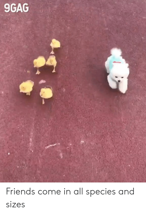 9gag, Dank, and Friends: 9GAG Friends come in all species and sizes