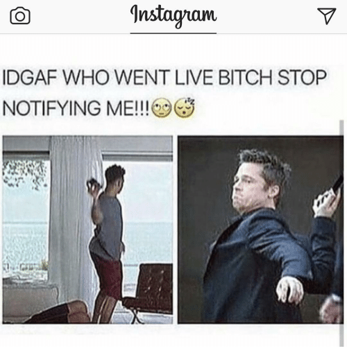 new concept 68043 8b8c5 9nstaguam-idgaf-who-went-live-bitch-stop-notifying-me-9340407.png