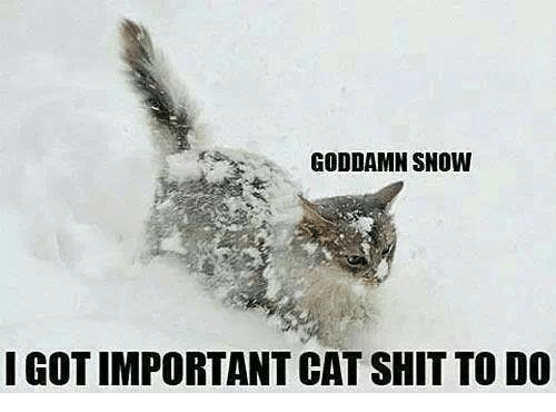 GODDAMN SNOW I GOT IMPORTANT CAT SHIT TO DO  074a1e7d7392