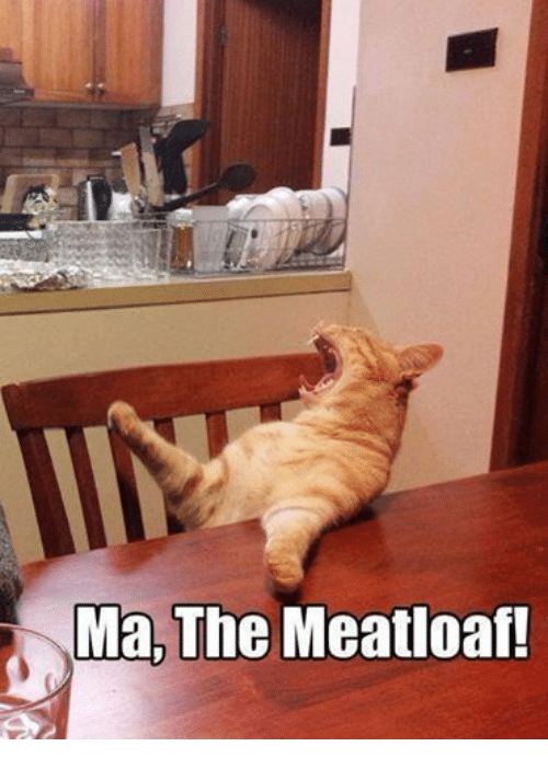 Ma the meatloaf cat