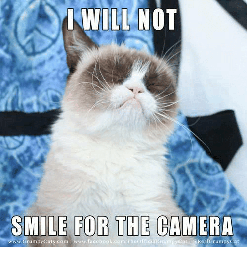 Cats, Grumpy Cat, and Camera: I WILL NOT  SMILE FOR THE CAMERA  www.Grumpy Cats com www.faceb  Real Grumpy Cat