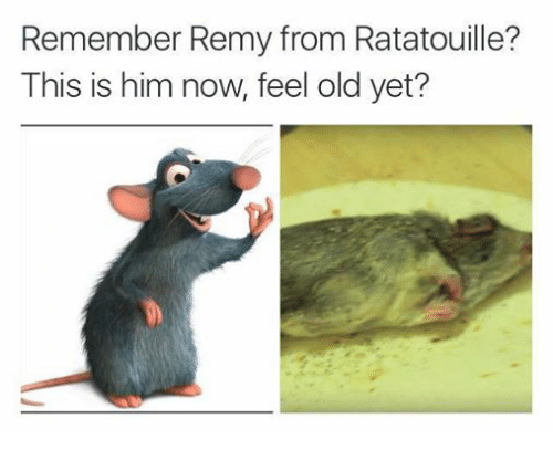 Remember Remy From Ratatouille This Is Him Now Feel Old Yet Ratatouille Meme On Me Me